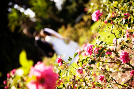 Exposition Rose Garden Wedding