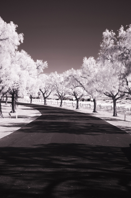Infrared Photography at Gainey Vineyard
