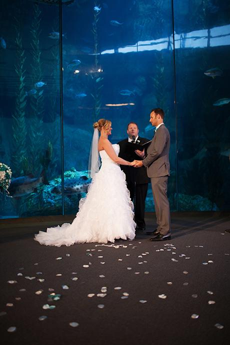 long beach wedding photographer aquarium of the pacific wedding aquarium of the pacific wedding