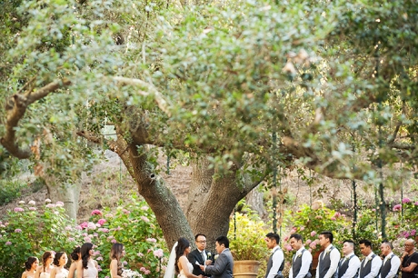 Wedding Ceremony Under Oak Tree