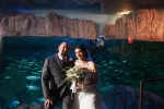 Aquarium of the Pacific Wedding