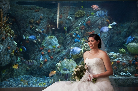 Aquarium of the Pacific Wedding Pictures