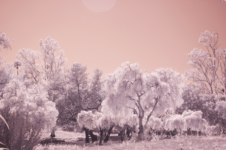 Infrared Photography Engagement Session